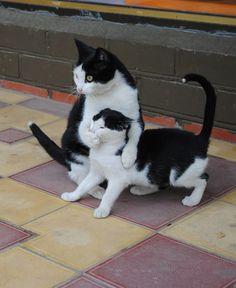 gatti-gattini-identici-02