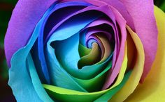 Download wallpapers colorful rose, 4k, art, rainbow, roses
