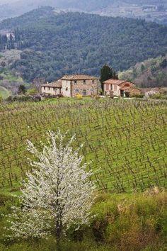 Tierras de cultivo y el campo de Chianti, Toscana, Italia