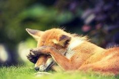Everything Fox - Camera shy