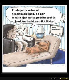 Et ole paha koira, ei sellaisia. Dog Jokes, Funny Dog Memes, Funny Animal Memes, Funny Dogs, Funny Animals, Cute Animals, Dog Humor, Social Work Humor, Therapy Humor