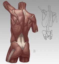Anatomy Demos via cgpin.com