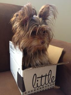 Little Brown Dog in an itty bitty LBB box! Submitted by LBBer Alexandra Reina #doglovers #adorbs #lbbmascots