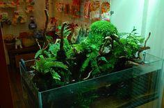 アクアテラリウム専門店 PLANTSTON プランツトン Freshwater Aquarium, Aquarium Fish, Terrarium Shop, Paludarium, Aquaponics, Bonsai, Fresh Water, Terraria, Geckos
