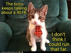 Image may contain: cat and text