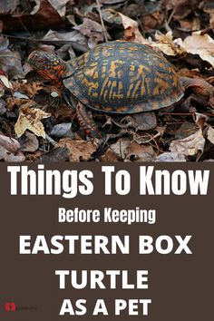 Taking Care of Eastern Box Turtle needs some expertise. Here are the things that you should know before keeping Eastern box turtle as a pet. Turtle Diet, Turtle Facts, Tortoise As Pets, Tortoise Turtle, Types Of Turtles, Box Turtles, Pet Turtle Care, Turtle Information, Box Turtle Habitat