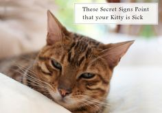 These Secret #Signs should not be #Ignored for Healthy Well-being of your #Kitten -