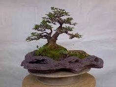 Resultado de imagem para vaso bonsai