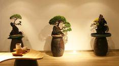 A Compelling First Look Bonsai Garden, Bonsai Trees, Planter Pots, Flowers, Ideas, Garden, Bonsai, Royal Icing Flowers, Thoughts