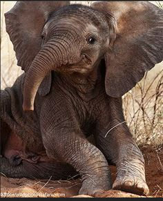 This young elephant actually looks like it's smiling at us!