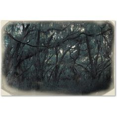 Trademark Fine Art Forest Dreams Canvas Art by Patty Tuggle, Size: 16 x 24, Multicolor