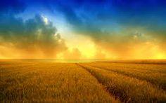 Fields of Gold  http://viewallpapers.com/wp-content/uploads/2013/05/Golden-Summer-Field.jpeg