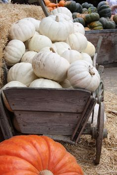 white pumpkins.