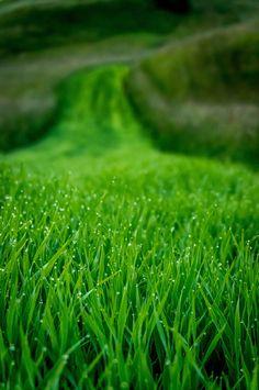 Photograph Green river of dew by Matúš Cvitkovič on Go Green, Green Grass, Green Colors, Colours, Green River, World Of Color, Color Of Life, Dame Nature, Jolie Photo