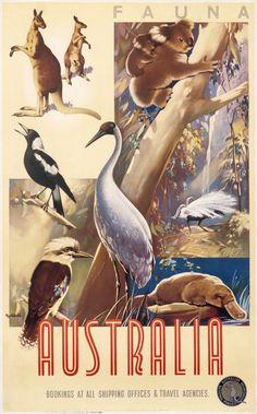 Vintage Travel Poster, Australia Fauna - by James Northfield - Retro Poster, Vintage Travel Posters, 1950s Posters, Art And Illustration, Posters Australia, Australian Vintage, Online Posters, Advertising Poster, Australia Travel