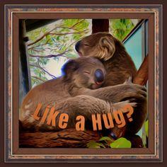 Koala Bears know how to cuddle! Hugs, Cuddling, Bear, Big Hugs, Physical Intimacy, Bears