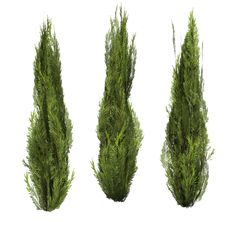 Evergreen-set of 3 by *BrokenWing3dStock on deviantART