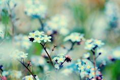 growing wild by Manuela Neumann on 500px