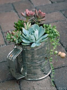 Succulents look awesome in unusual containers