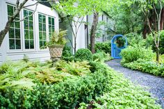 Green shade garden with ferns, boxwood & gravel path to blue gate - Floralis