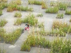 Contemporary dry garden