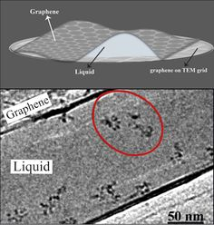 Scientists at the Center for Soft and Living Matter, within the Institute for Basic Science (IBS), were able to see the movement of individual molecules in real time without the need to stain them. Electron microscopy replaces the light beam used in optical microscopy with a beam of electrons. The electrons have a much shorter wavelength compared to light and can provide much higher magnification than optical microscopy. However, electron microscopy is usually only used for visualizing…