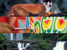 Visit Costa Rica - The Costa Rica Tourism Board