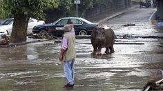 Hroch se potuloval ulicemi  - FOTO: Beso Gulashvili, Reuters