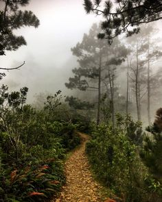Of all the #paths you take in #Life make sure a few of them are dirt. #adventuretravel