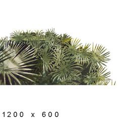 Texture png Watercolor Elements Plants