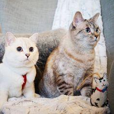 via CyBeRGaTa - Cats, Memes, New Mexico — via nala_cat @ nala_cat Ready for a holiday...