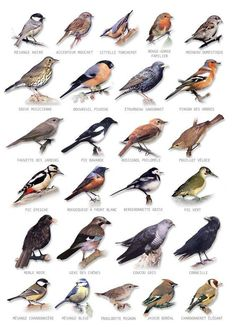 bird chart You are in the right place about wild Birds Here we offer you the most beautiful pictures about the colorful Birds you are looking for. When you examine the bird chart part of the picture y Pretty Birds, Love Birds, Beautiful Birds, Birds 2, Glass Birds, Small Birds, Beautiful Places, Beautiful Pictures, Vogel Illustration