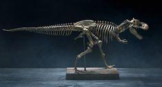 Jurassic Display Hack Under $50!  dinosaur bones skeleton diy home decor jurassic park jurassic world trex