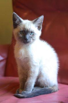 beautiful kitten.