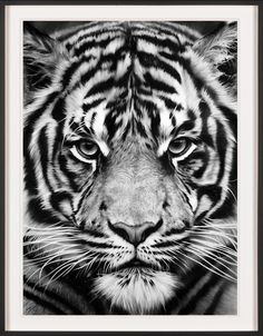 Untitled (Tiger) by Robert Longo  Available in our shop: http://artsation.com/en/shop/robert-longo