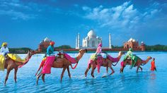 Camels and Taj Mahal India. Went to the Taj Mahal, but did not see anything as spectacular as this. Places Around The World, Oh The Places You'll Go, Travel Around The World, Places To Visit, Taj Mahal, Nepal, Thinking Day, Best Places To Travel, Travel List
