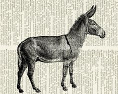 Hey, I found this really awesome Etsy listing at https://www.etsy.com/listing/71740413/donkey-vintage-engraving-of-jackass