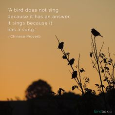 """""""A bird does not sing because it has an answer.  It sings because it has a song."""" - Chinese Proverb #bird #quotes birdbox.se"""