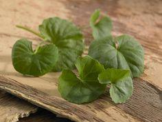 7 Herbs and Spices for Better Brain Health: Gotu Kola Cure For Sunburn, Gotu Kola, Stomach Ulcers, Healthy Herbs, Healthy Mind And Body, Best Brains, Brain Food, Brain Health, Health Products