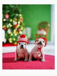 Merrrry Christmas to you Two