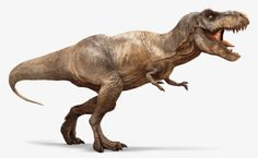 Tyrannosaurus Rex (T-Rex) - Wiki - Ark Survival Evolved Forum und . Tyrannosaurus Rex (T-Rex) - Wiki - Ark Survival Evolved Forum und . T Rex Jurassic Park, Jurassic Park World, Indominus Rex, Tyrannosaurus Rex, Dinosaur Fossils, Dinosaur Art, Dinosaur Images, Images Of Dinosaurs, Illustration Photo