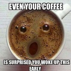 Even You Coffee Is Amazed That You Are Awake This Early - Funny Animal Pictures With Captions - Very Funny Cats - Cute Kitty Cat - Wild Animals - Dogs If you think my coffee is surprised, you should see my face! A laugh. Funny Animal Pictures, Funny Images, Funniest Pictures, Quotes Images, Funny Cats, Funny Animals, Wild Animals, I Love Coffee, Coffee Coffee
