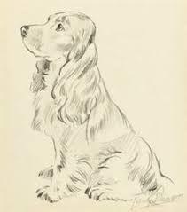 Afbeeldingsresultaat voor cocker spaniel drawing