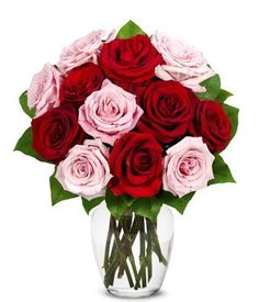 Introducing From You Flowers  One Dozen Roses in Red  Pink Free Vase Included. Great Product and follow us to get more updates!