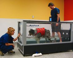 Canine Rehab & Arthritis Center got their first patient into the new underwater treadmill today! 'Sulley' had a TPLO with CCO about a month ago. The rehabilitation therapy is helping her get back to full activity....but we think she'll really miss this cool underwater treadmill once therapy is completed.#dogs#pets#animals#veterinary#rehab