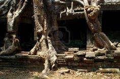 tree roots engulfing temple pillars providing new support Stock Photo
