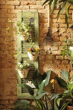 flower filled pots on the old shutter