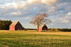 Barns, Prince Edward Island, Canada