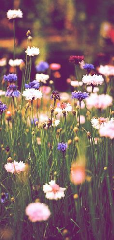 Summer days among the wild flowers...