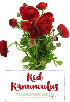 Names And Types Of Red Wedding Flowers With Seasons Pics